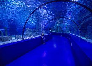 Dunwoody Place | Local photo of Atlanta Aquarium
