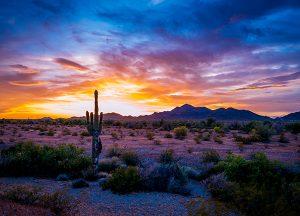 Sun City West | Local photo of Arizona desert