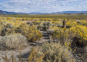 The Chateau at Gardnerville | Local Gardnerville Ranchland