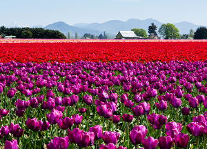 The Gardens at Marysville | Local flower field