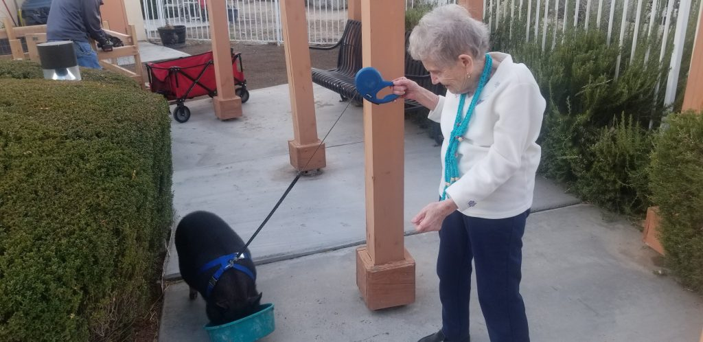 Whispering Winds of Apple Valley | Sox the therapy pig with elder