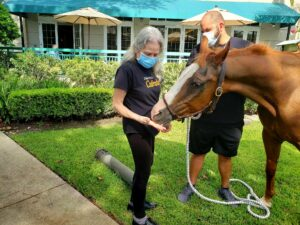 Pegasus Senior Living | Therapy horse